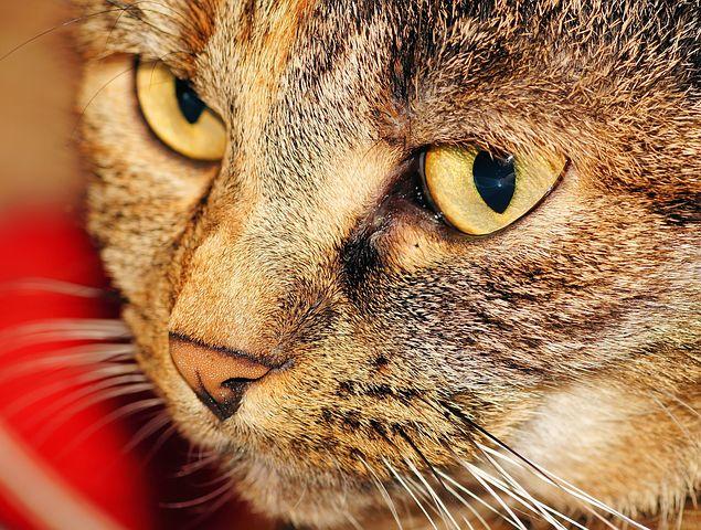 cat-558228__480.jpg